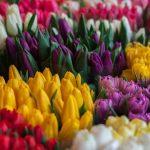 Dlaczego kwiaty są dobrym pomysłem na prezent? Inspiracje i porady.